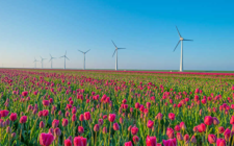 维斯塔斯通过ECN为Wieringermeer风测试站点确保订单